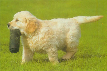 Perritos Cachorros + YAPA