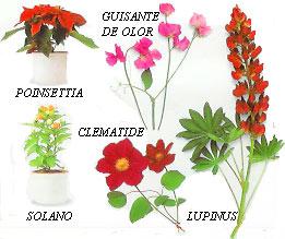 Gatos primeros auxilios for Cuales son las plantas ornamentales y sus nombres