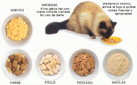 gatos, comida y alimentación del gato