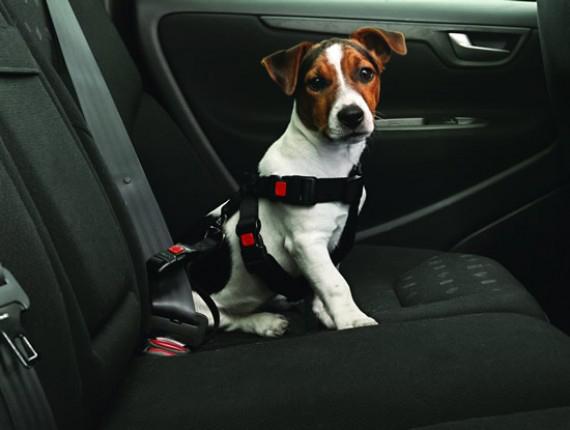 arnes seguridad perros coche