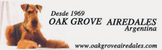 Oak grove airedales
