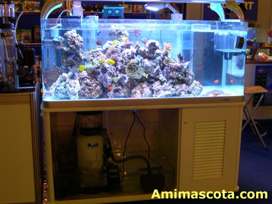 Fotos y explicacion de mi hobbie acuarismo taringa for Acuarios para peces marinos